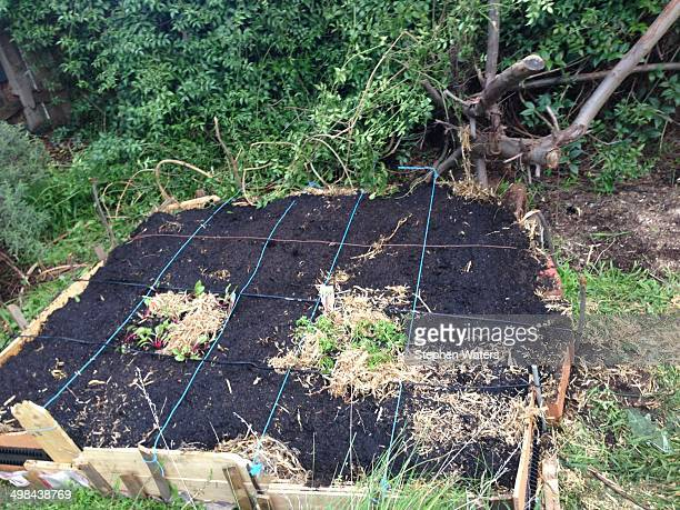 DIY square foot garden made from recycled materials in urban Thornbury Victoria Australia