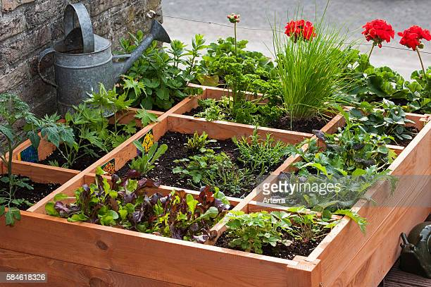Square foot gardening by planting flowers herbs and vegetables in wooden box on balcony