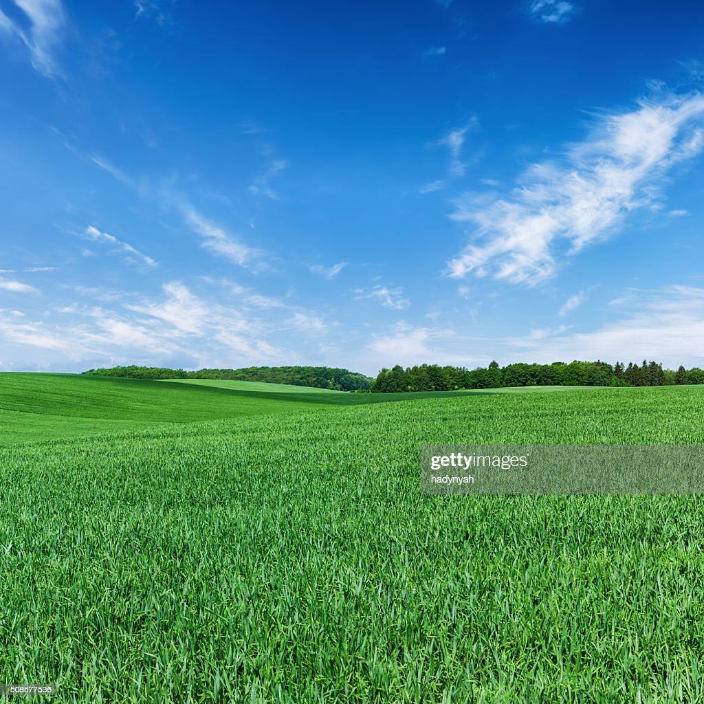 Square spring landscape 60MPix XXXXL - meadow, blue sky : Stock Photo