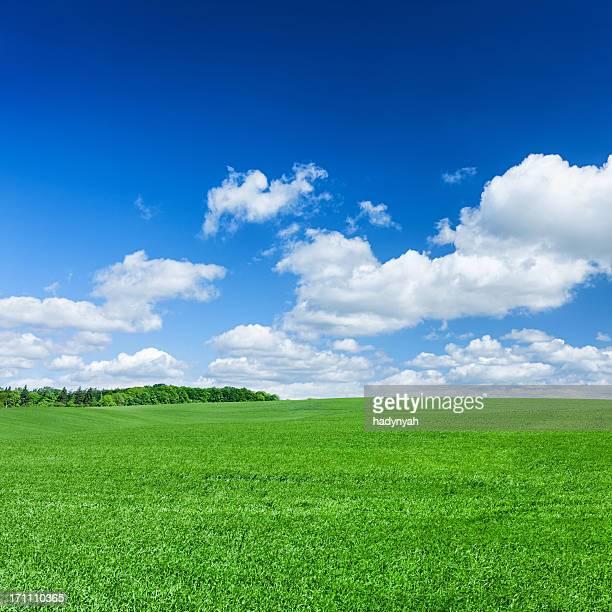 Square spring landscape XXXXL 31 MPix - meadow, blue sky