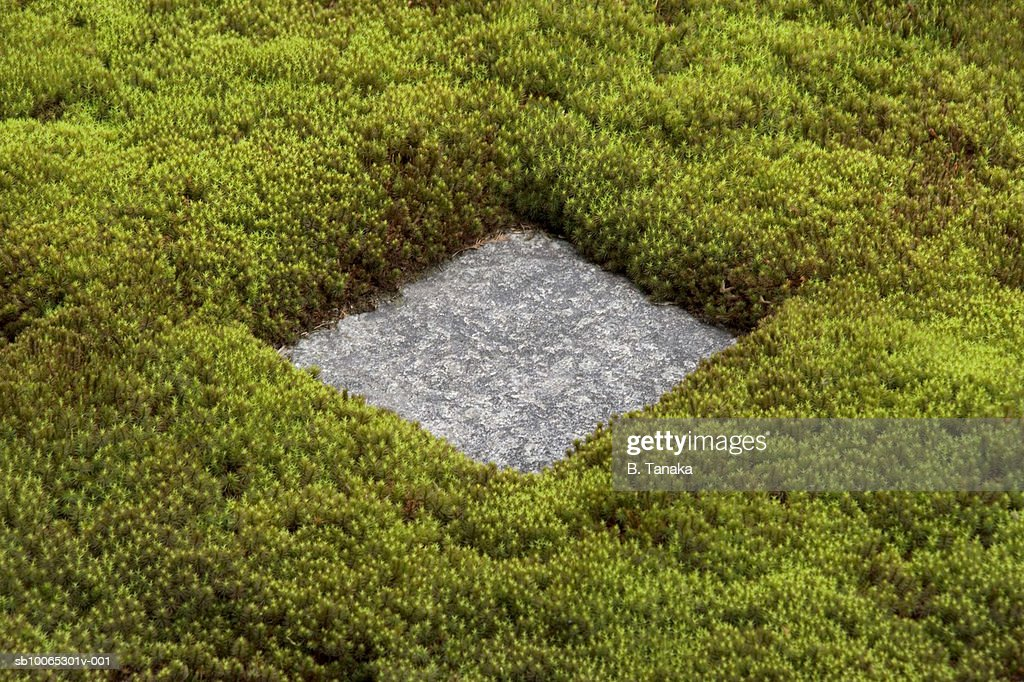 Square stepping stone surrounded by thick green moss : Foto stock