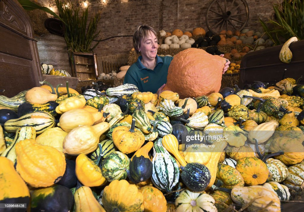Squashes in Lower Saxony : News Photo