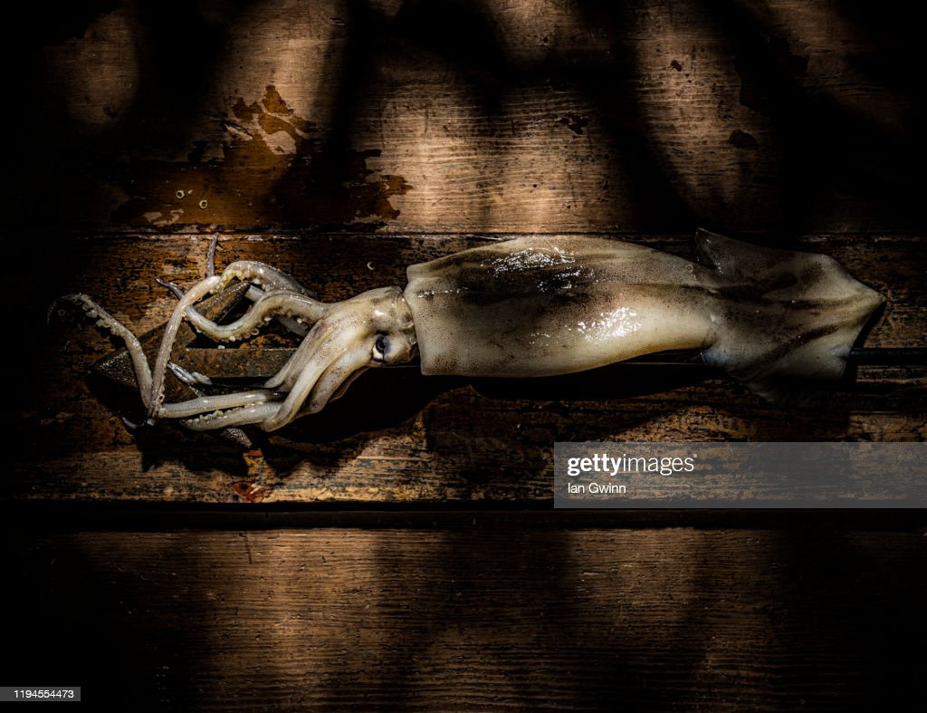 Squid and Harpoon : Stock Photo