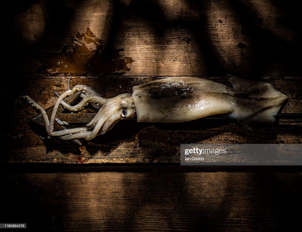 Squid and Harpoon : Foto de stock