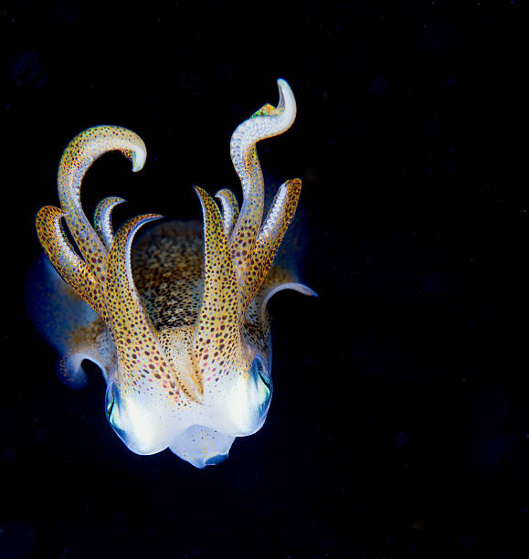 Squid at night