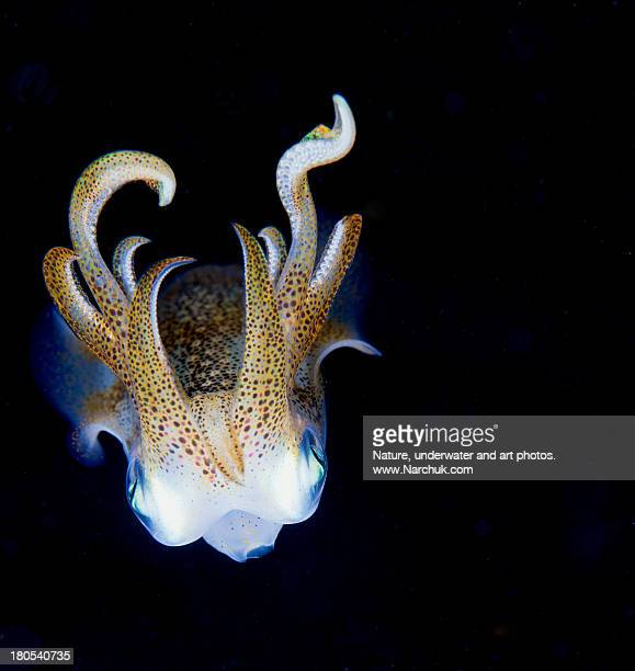 squid at night - invertebrate stock photos and pictures