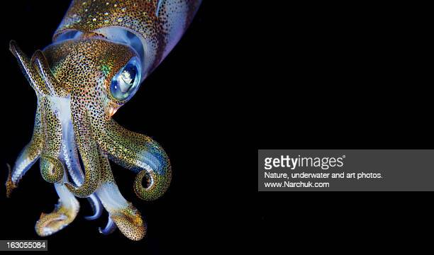 Squid calendar