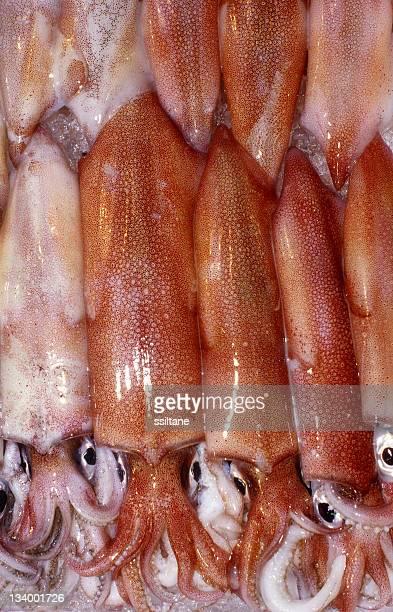 Squid Octopus