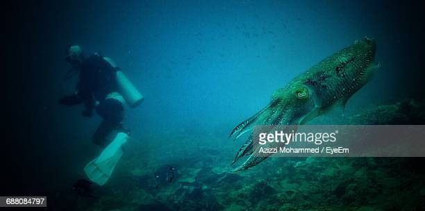 squid swimming in sea - giant squid stock pictures, royalty-free photos & images