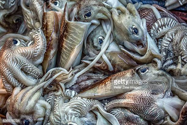 Squids and octopuses catched by fishermen in Fort Kochi, Kerala, India