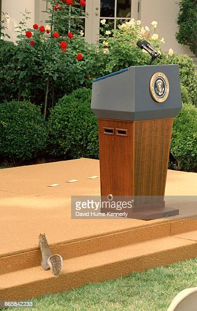 A squirrel approaches the podium in the Rose Garden at the White House September 18 2001 in Washington DC It was on the day President George W Bush...