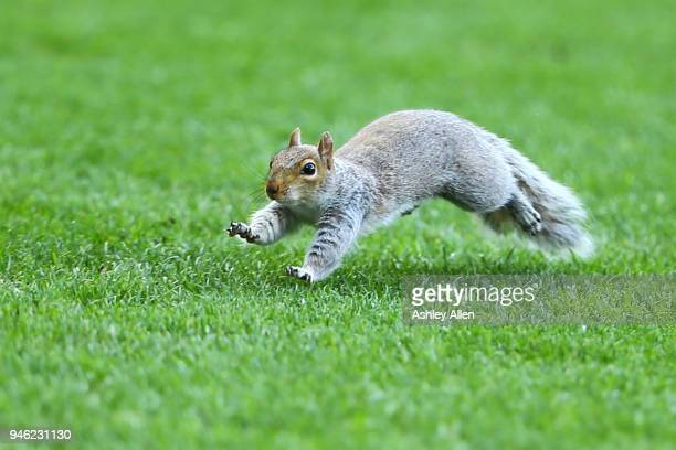A squirrel causes a pause in play during the Sky Bet Championship match between Hull City and Sheffield Wednesday at KCOM Stadium on April 14 2018 in...