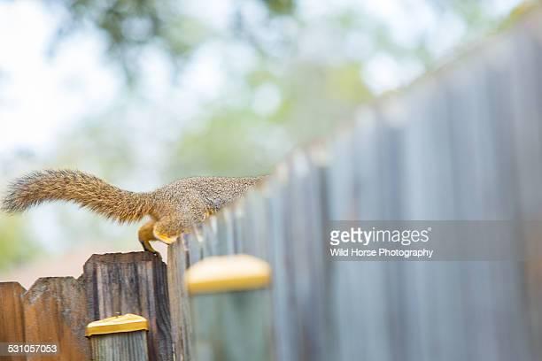 Squirrel escaping