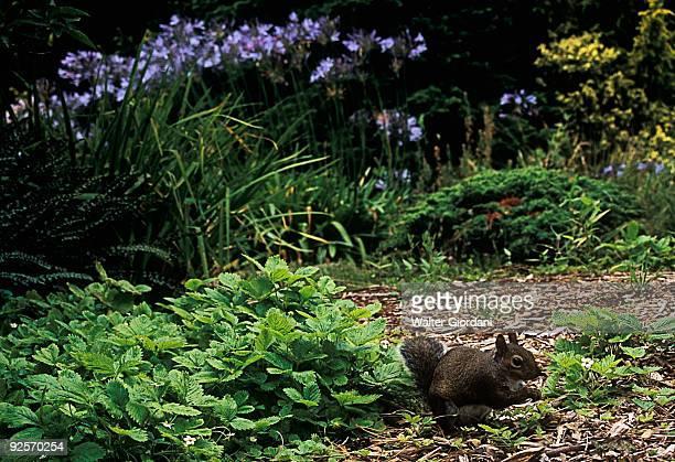 Squirrel in a flower bed