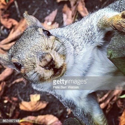 A squirrel in Battersea Park