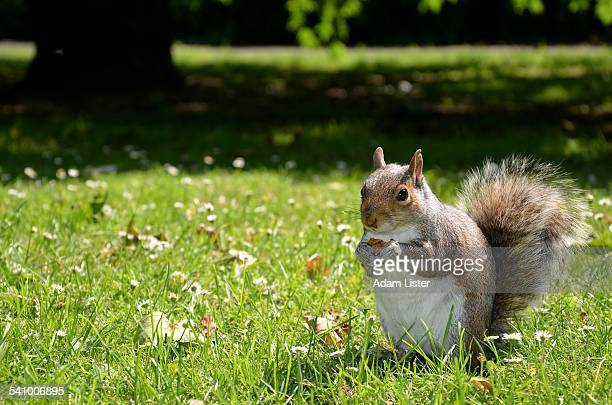 Squirrel in the sun