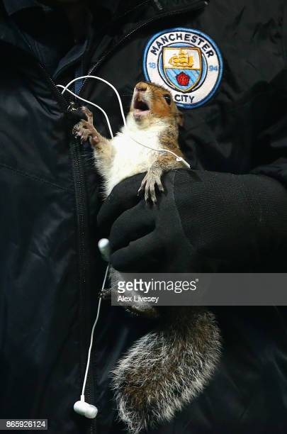 A squirrel is removed from the pitch during the Carabao Cup Fourth Round match between Manchester City and Wolverhampton Wanderers at Etihad Stadium...
