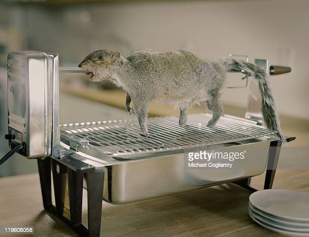 Squirrel on an indoor rotisserie oven