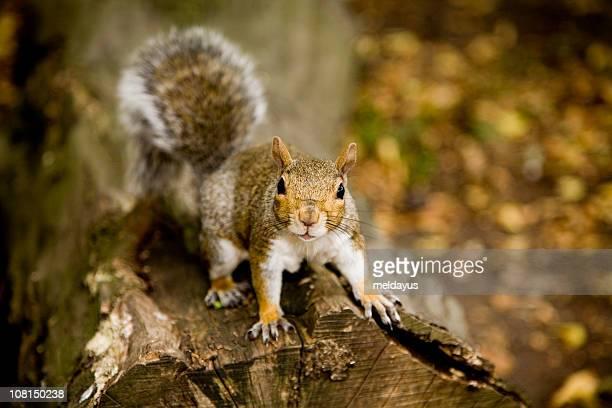 Squirrel on Log