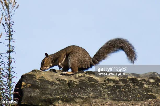 Squirrel On Rock Against Sky