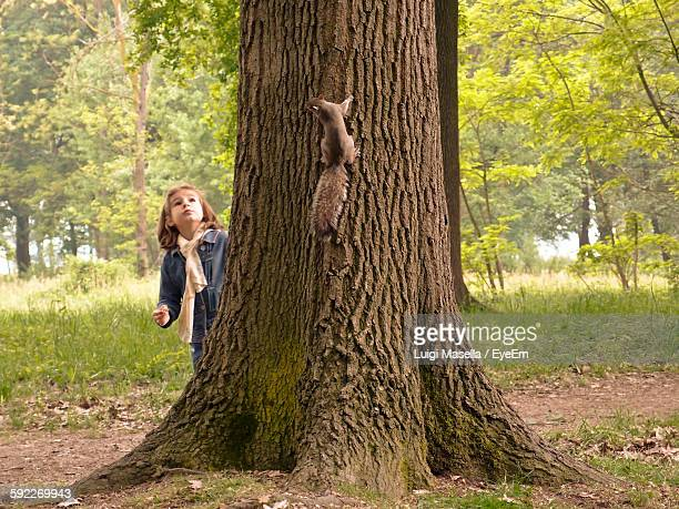 squirrel on tree trunk with girl looking up in forest - scoiattolo foto e immagini stock