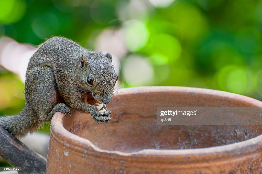 Squirrel Portrait : Stock Photo