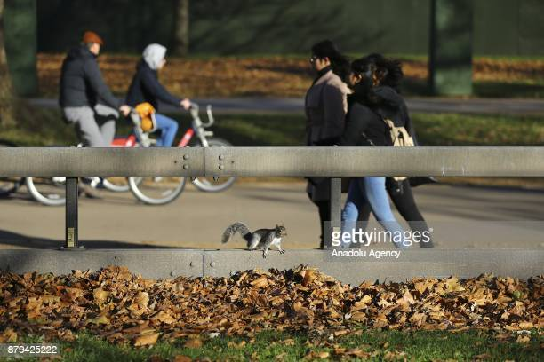 A squirrel runs around after being fed by people at Hyde Park during the last days of autumn on October 26 2017 in London England