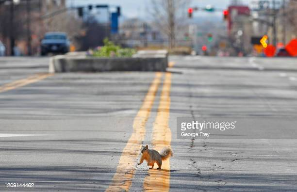 Squirrel runs in the middle of West Temple Street, that is devoid of cars outside the Conference Center where the 190th Annual General Conference of...