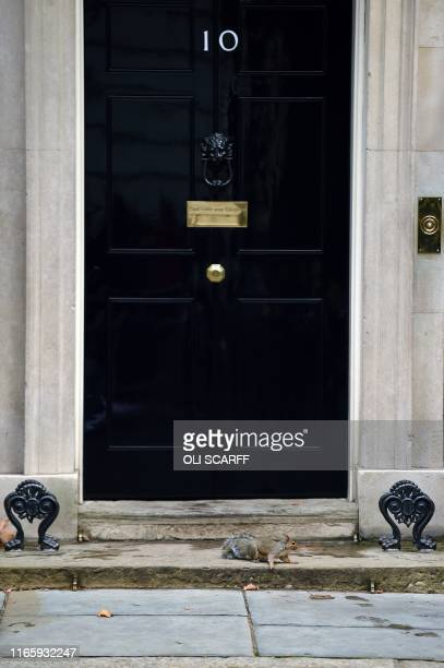 A squirrel runs past 10 Downing Street in central London on September 4 2019 Prime Minister Boris Johnson raised the prospect of a snap election on...