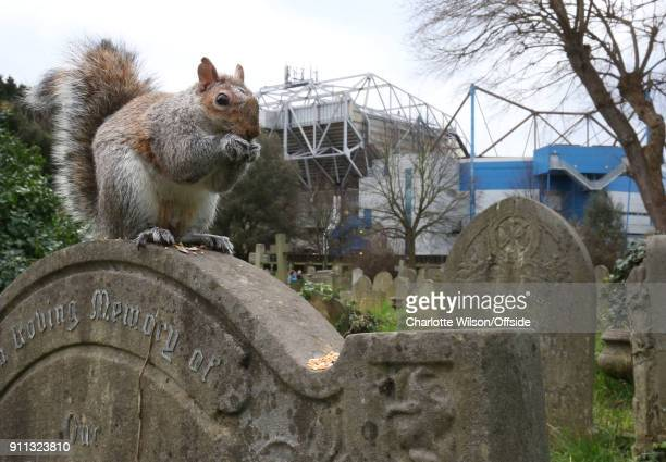 A squirrel sits on a gravestone in West Brompton Cemetery with Stamford Bridge behind ahead of The Emirates FA Cup Fourth Round match between Chelsea...