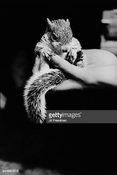 A squirrel sitting in the palm of a woman's hand circa 1975