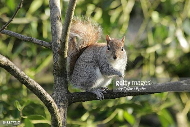 Squirrel Sitting On Tree