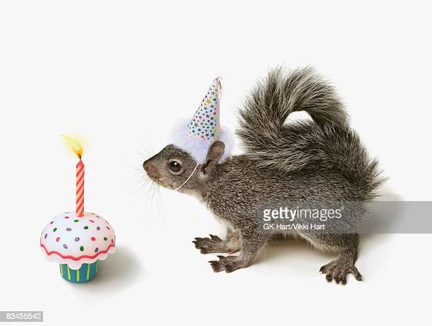 squirrel wearing party hat blowing out candle  - birthday candle stock pictures, royalty-free photos & images