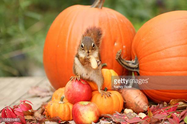 Squirrel  with autumn harvest