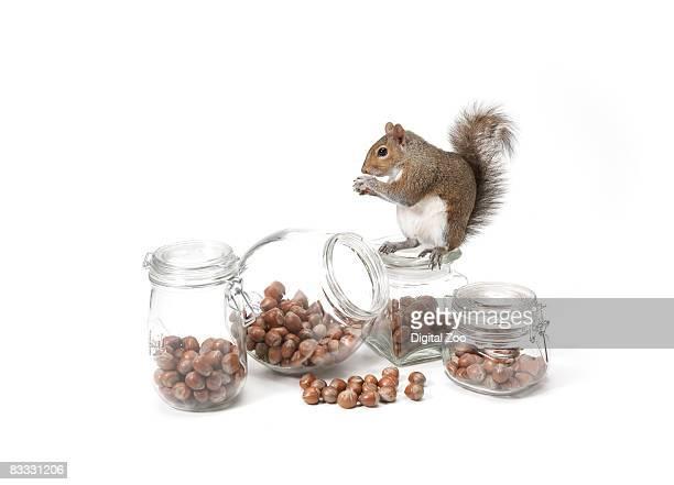 squirrel with jars of nuts - scoiattolo foto e immagini stock