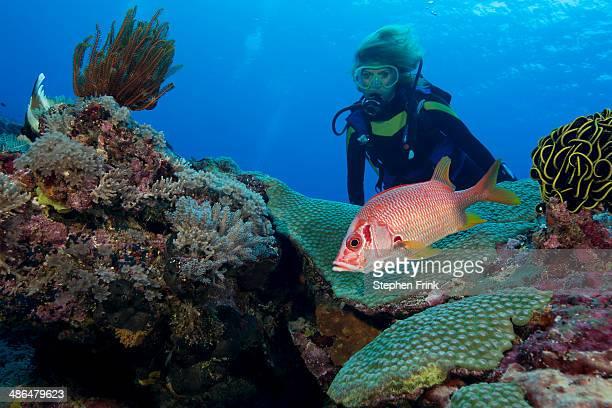 squirrelfish on coral reef. - ソロモン諸島 ストックフォトと画像