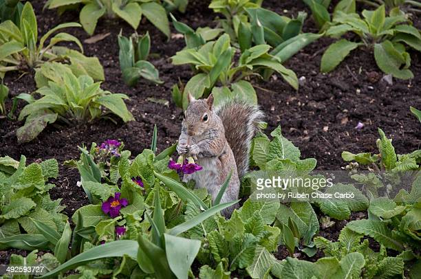 Squirrell with flowers.