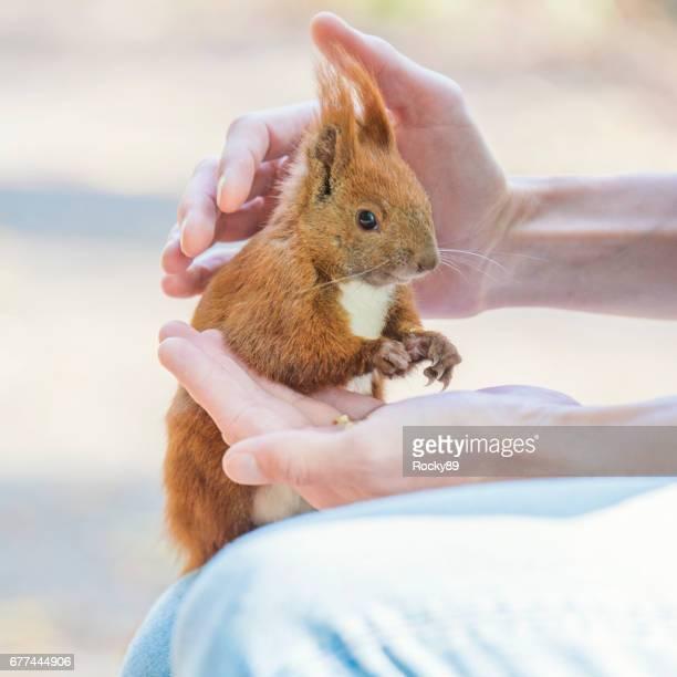 Squirrels in Wildlife
