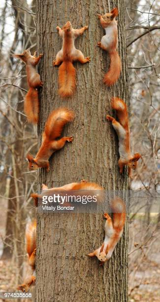 squirrels on tree - un animal fotografías e imágenes de stock
