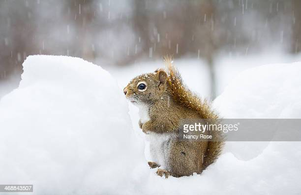 Squirrel's snow day