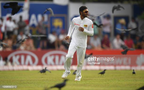 Sri Lanka fielder Dhananjaya de Silva fields amongst the flying crows during Day Two of the First Test match between Sri Lanka and England at Galle...