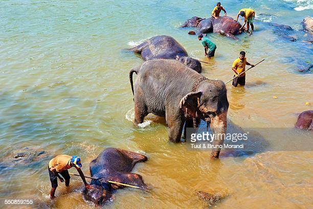 Sri Lanka, Pinnawela elephant orphanage
