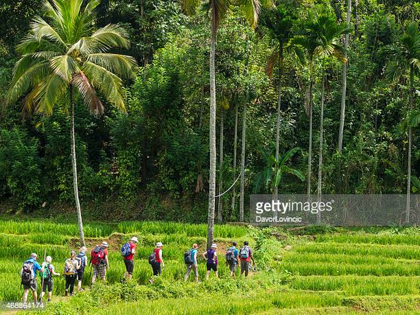 sri lanka trekking in knuckles range - kandy kandy district sri lanka stock pictures, royalty-free photos & images