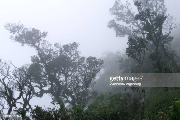 sri lanka wilderness, tropical trees in dense fog - argenberg stock-fotos und bilder