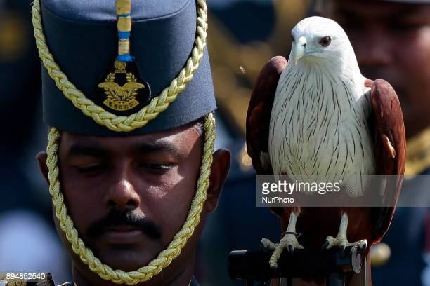 A Sri Lankan Airforce officer leads his soldiers in a parade as an eagle sits on his shoulder looking at an insect during an official ceremony for...