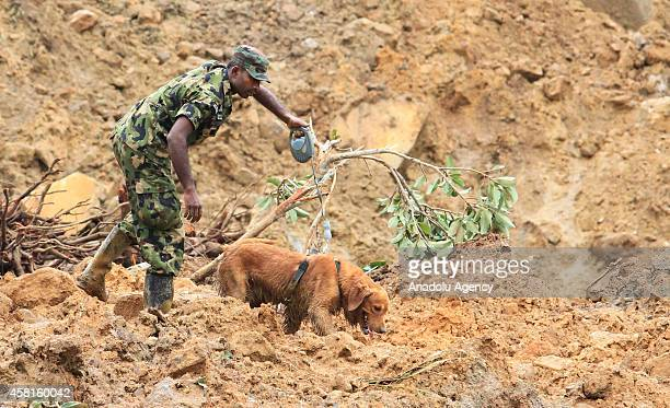 Sri Lankan army soldier uses a sniffer dog during the rescue operation at the site of a mudslide in the town of Koslanda in Badulla district, Sri...