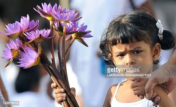A Sri Lankan Buddhist devotee holds flowers as she offers prayers during Vesak at the Temple in Colombo on May 5 2012 Vesak day which is a major...