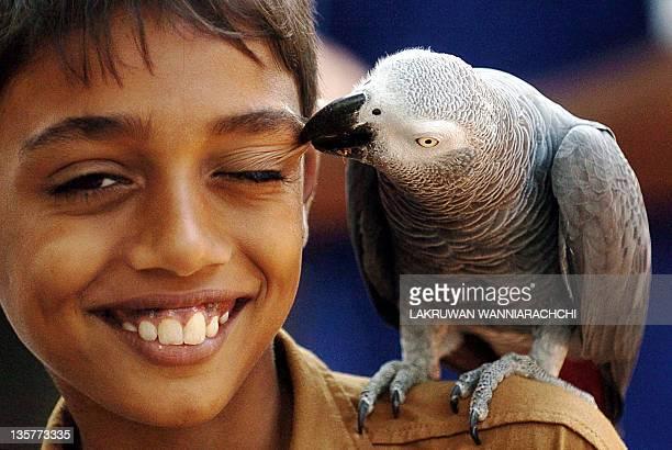A Sri Lankan child is pecked by an African Grey Parrot at a zoo at Dehiwala near Colombo 11 March 2006 The Sri Lankan government has banned the...