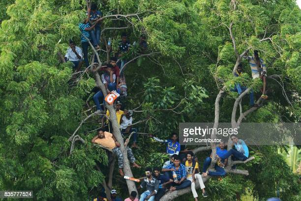 Sri Lankan cricket fans watch the first One Day International cricket match between Sri Lanka and India from atop a tree at the Rangiri Dambulla...