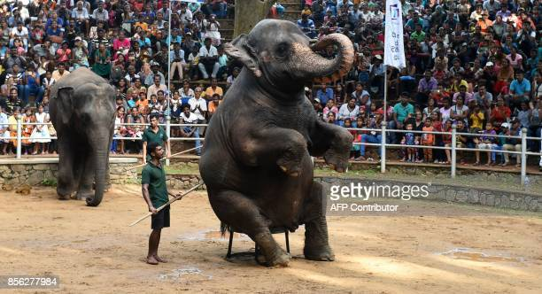 A Sri Lankan elephant performs as children watch a show at a zoo in Colombo on October 1 2017 / AFP PHOTO / ISHARA S KODIKARA